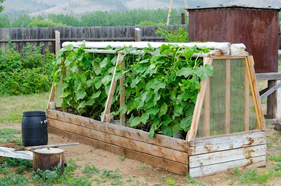Greenhouses for cucumbers: greenhouses photo and video, the correct trellis in May, open ground small, high