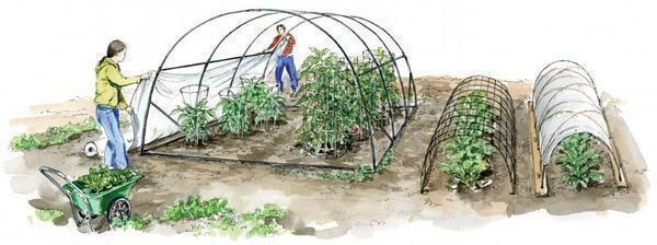 Vegetaria - a greenhouse according to Scandinavian technology: 5 features