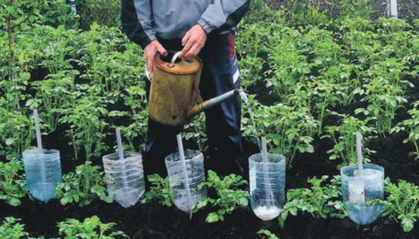 Watering from plastic bottles is quite popular, because it is quite possible to make one yourself