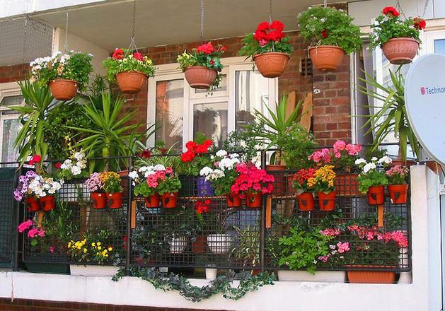 Decoration of the balcony: flowers and design, stand ampelnye, decorate the plants beautifully, photos and landscaping with their own hands