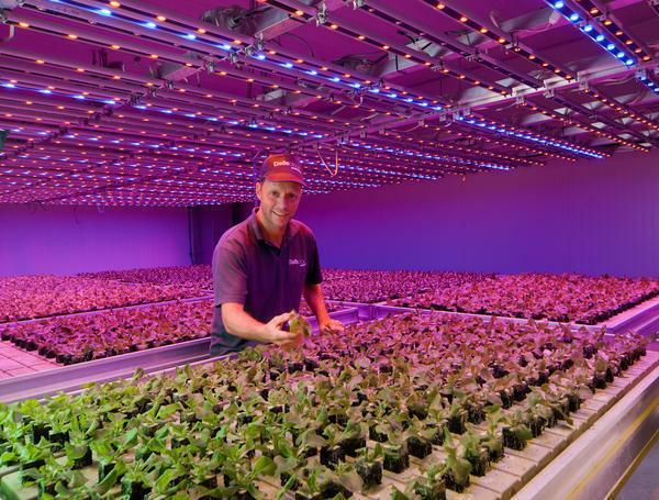 LED lighting has a beneficial effect on plant growth