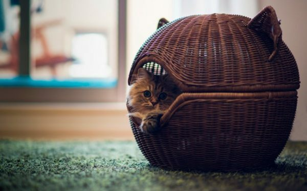 Stylish round cat house made of tubes of newspaper can become a real decoration of your interior