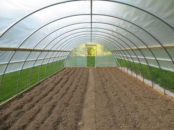 Greenhouse 5x6: greenhouse12 and width 8 meters, polycarbonate size
