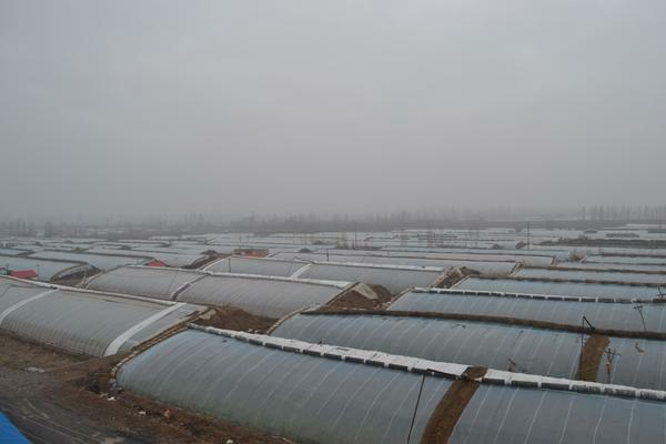 The main advantages of such greenhouses are the way to conserve heat inside the greenhouse space
