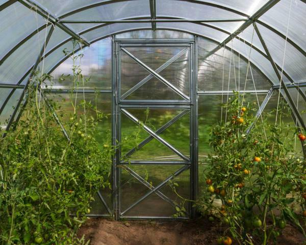 Save the greenhouse in winter will help dismantle polycarbonate sheets