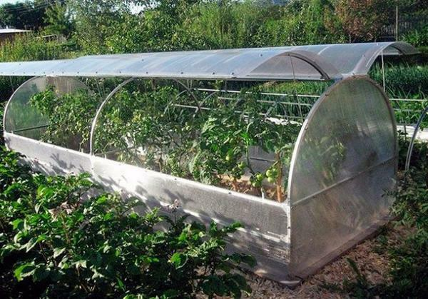 The presence of this greenhouse on your site will allow planting to begin a couple of weeks earlier than usual