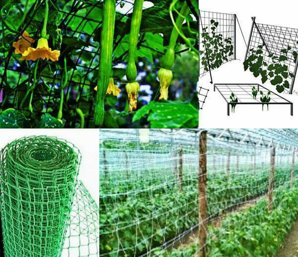 The trellis grid is absolutely safe, and it can be used for several seasons