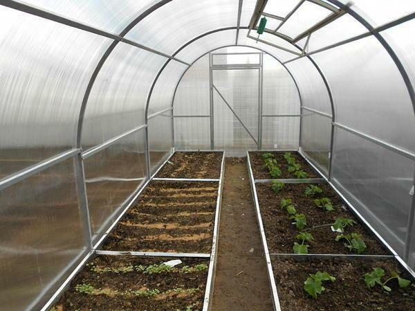 How to make beds in a greenhouse made of polycarbonate: photo and correct arrangement of beds, greenhouse arrangement