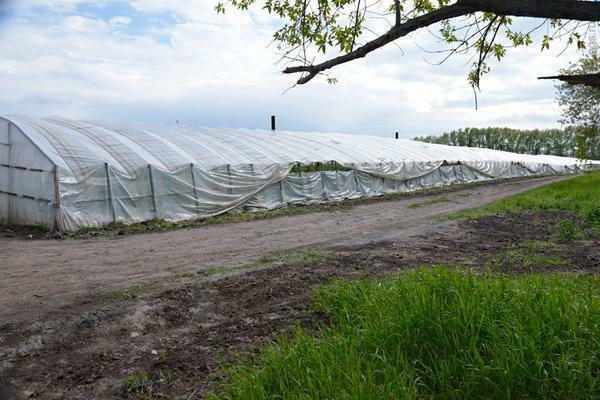 Chinese greenhouses have become in demand not only in the country-producer, but also in the Russian expanses